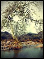 trees_02 by fuamnach