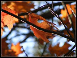 Autumn Leaves 5 by coyoteflutesong