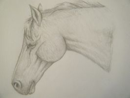 Horse head by LuxxPrior