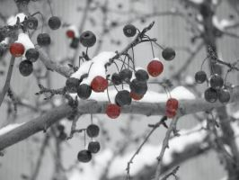 Berries by itsayskeds
