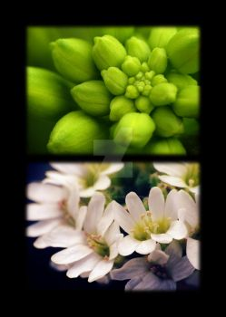 Wildflowers Diptych 1- Before and After by zaphotonista