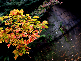 Autumn Japanese Garden by theblindalley