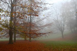 Autumn Haze by webworm