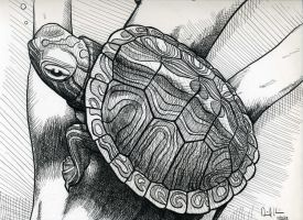 Red Eared Slider by Anthrpicdecadnce
