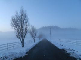 Icefog42 by T-Thomas
