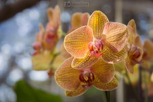 Orchidea with bokeh by aleexdee