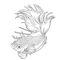 betta splendens - lineart by BlackNina