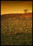 Just tree 2 color by mjagiellicz