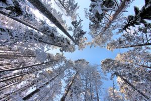 look up trees by KariLiimatainen