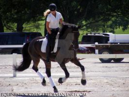 Warmblood 54 by EquineStockImagery