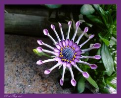 flower1b by priesteres-stock