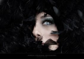 Feathered by Stridsberg