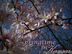 Springtime in Kansas by WhenPigsFry