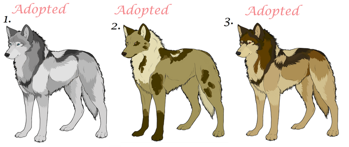 Realistic wolf Adoptables 007 by AimiTheSeawolf