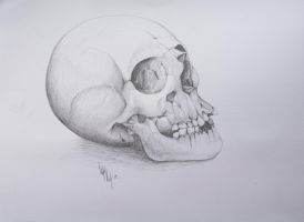 Scull by snowWwflake