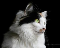 Winter's Coming by ThreshTheSky