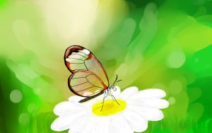 Glasswing Butterfly by Pink-Doodlr