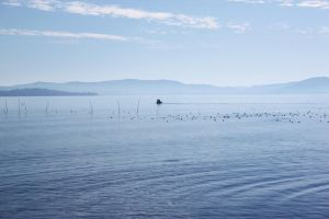 Lake Trasimeno II by DreamingDragon-Fly