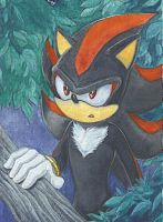 ACEO_Shadow_WTF by RainWaterfallsZone