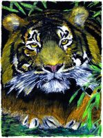 tiger No 3 - oil pastels by EwaBlackWidowVsHare