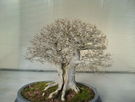 Bonsai 026 by aurochstock
