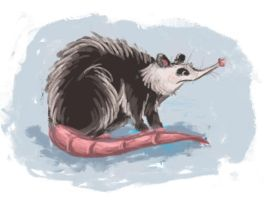 Opossum by NicoleWest