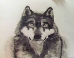 Wolf by Linda242109