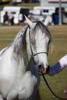 STOCK - Gold Coast Show 113 by fillyrox