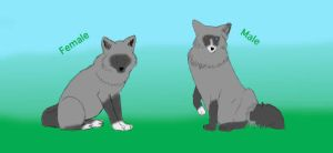 Silver Fox Breeding Pair for Zoo Lotto by OceanLore