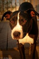 Bully's close up by TlCphotography730