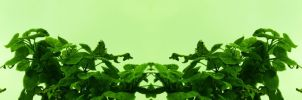 Organic Symmetry 4 by meathive