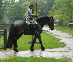 frisian and rider baroque in the rain 02 by Nexu4