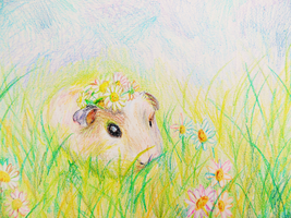 Guinea Pig by zara-leventhal