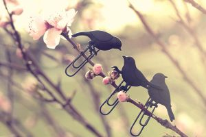Little Blackbirds by Pinepassionmango