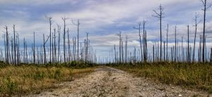 Partial death of a forest by peterpateman