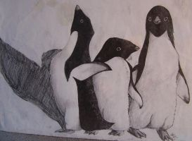 adelie penguins by cottonball