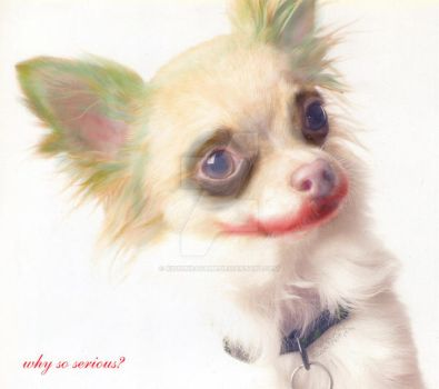 Y THIS CHIHUAHUA SO SRS by KitsuneAyame