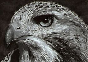 Eagle - ACEO by Sofera