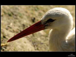 stork by c1p0