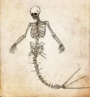 Mermaid Skeleton by lord-phillock