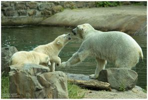 little polar bears with daddy by Claudia008