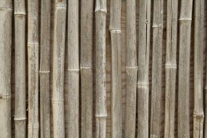 Bamboo Reed Stock by Cats-go-moo-always