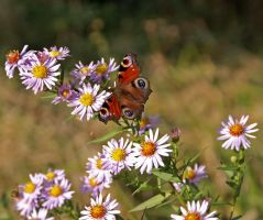 Butterfly with flowers by positively