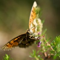 Butterfly by SantiBilly