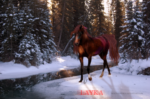 GIFT: Layka by Roxy-Graphics
