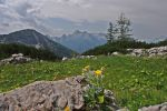 Mountain Meadow by Burtn