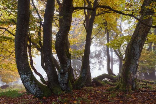 Dancing the Autumn Blues by aw-landscapes
