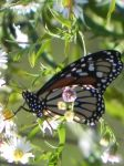 Butterfly1 by dmguthery