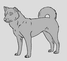 Dog Template - Kishu Inu by NaruFreak123-Bases