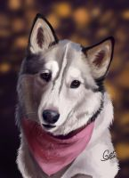 Kodiak -- Pet Portrait by InstantCoyote